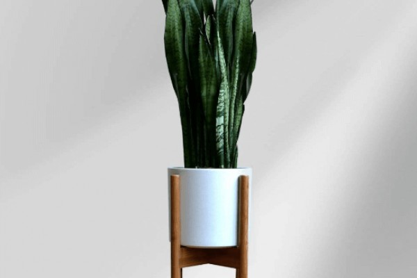 Best Plant Stands Reviewed 2019 GearWeAre