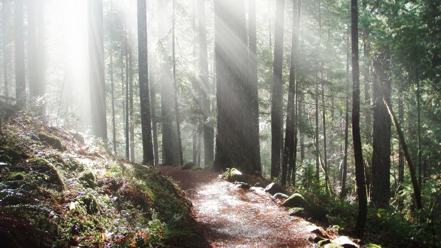 Trail Profiles: North Umpqua Trail