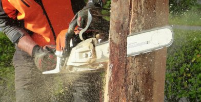 Our review of the best overall chainsaws