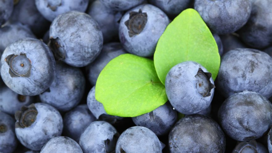 Wild Food Profile: Blueberry