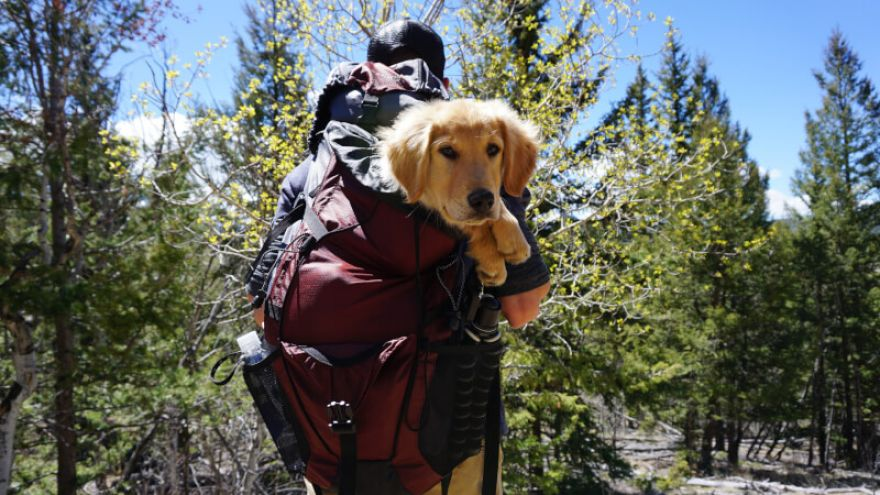 Hiking with Dogs -the ins and outs GearWeAre