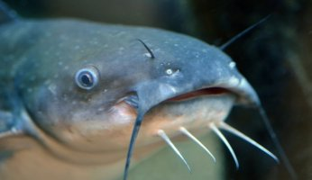 The Ultimate Catfish Guide