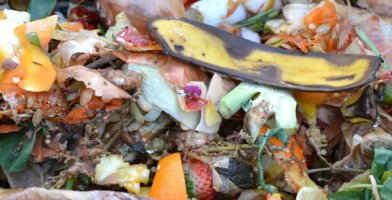 Our review of the best composters