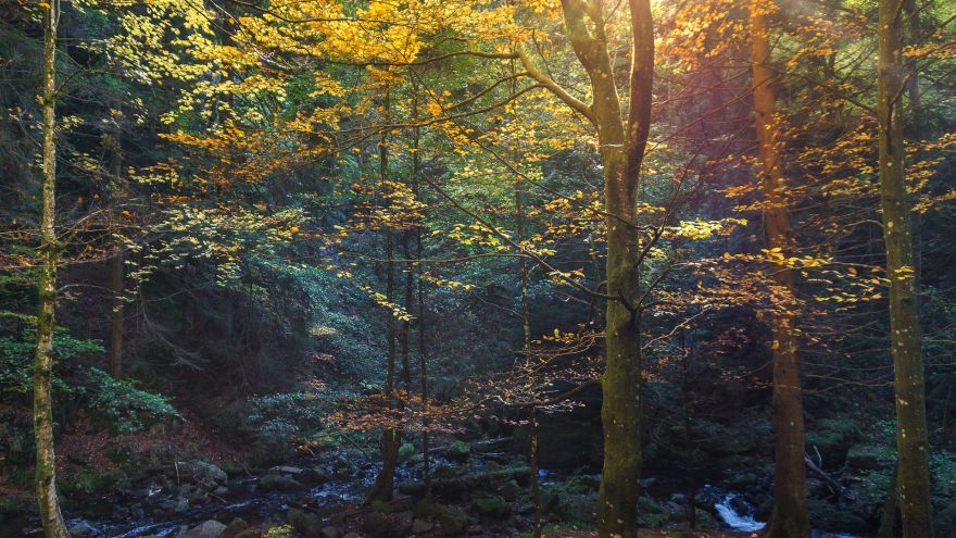 Where You Can Find The Best Fall Foliage