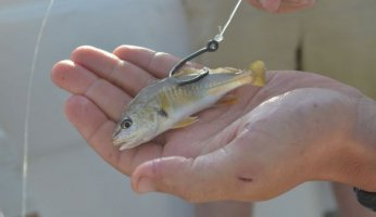 Fishing with Live Bait