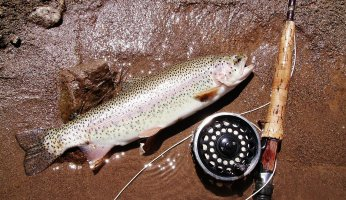 Catching Trout with Hoppers