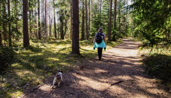 How to Easily Find Dog Friendly Hiking Trails